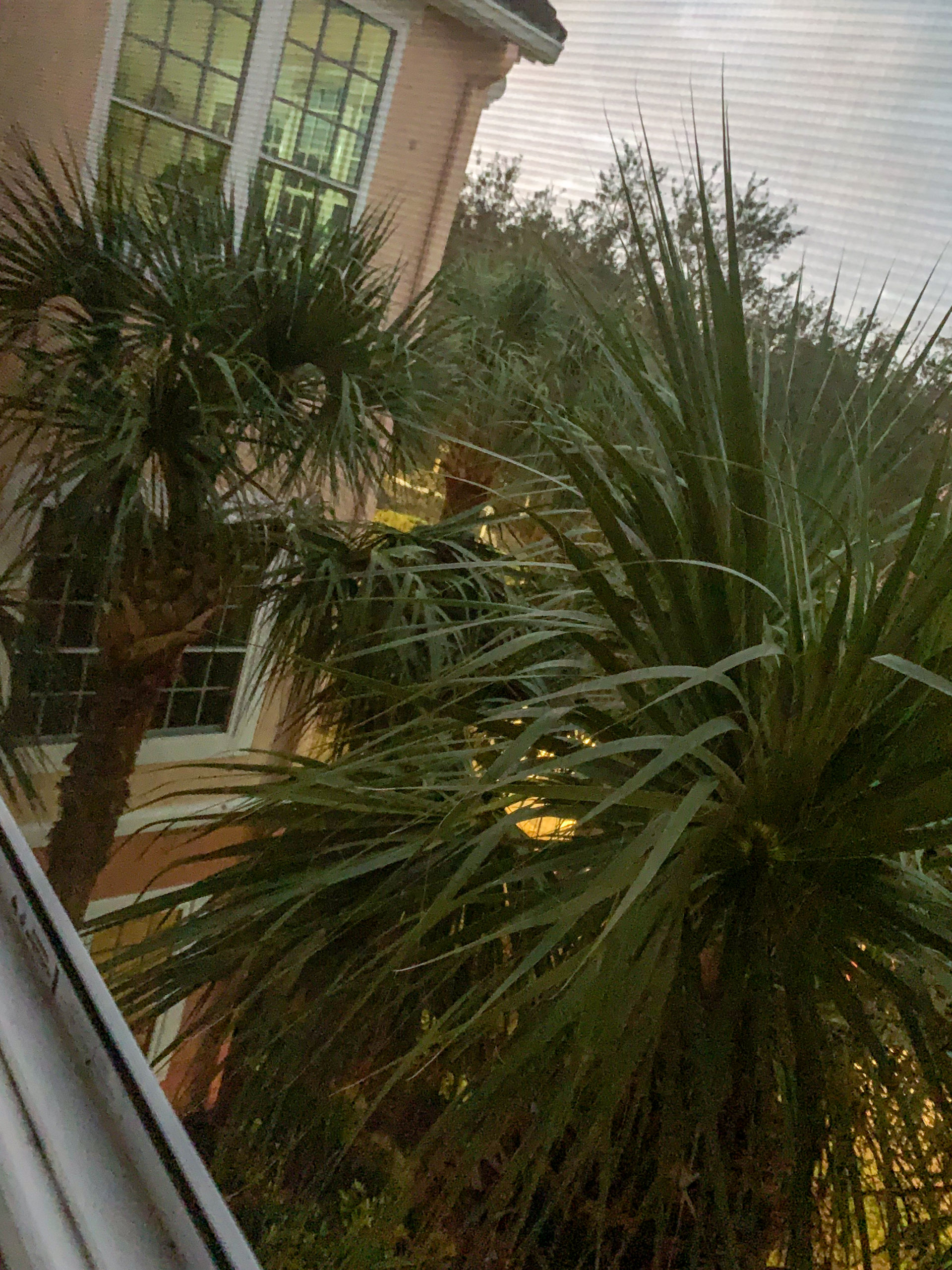 Pálmafák az ablakom előtt