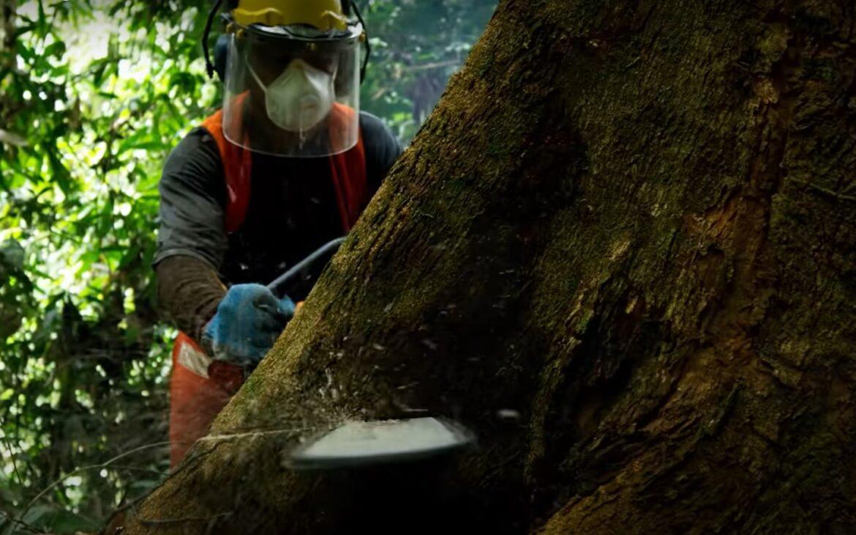 Esőerdő pusztítás